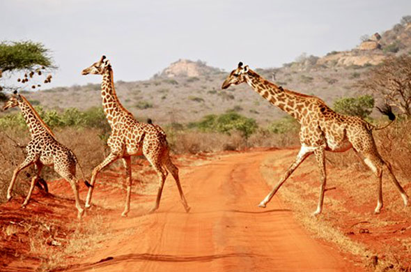 Diani-travel-ceter-tsavo-east
