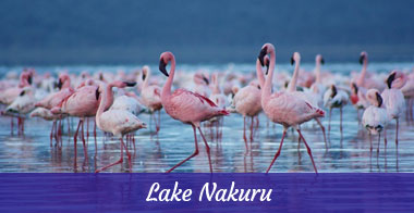 Diani_travel_center_Lake_Nakuru