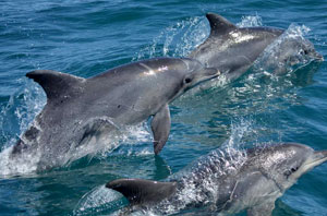 Diani_travel_center_day_trips_dolphins