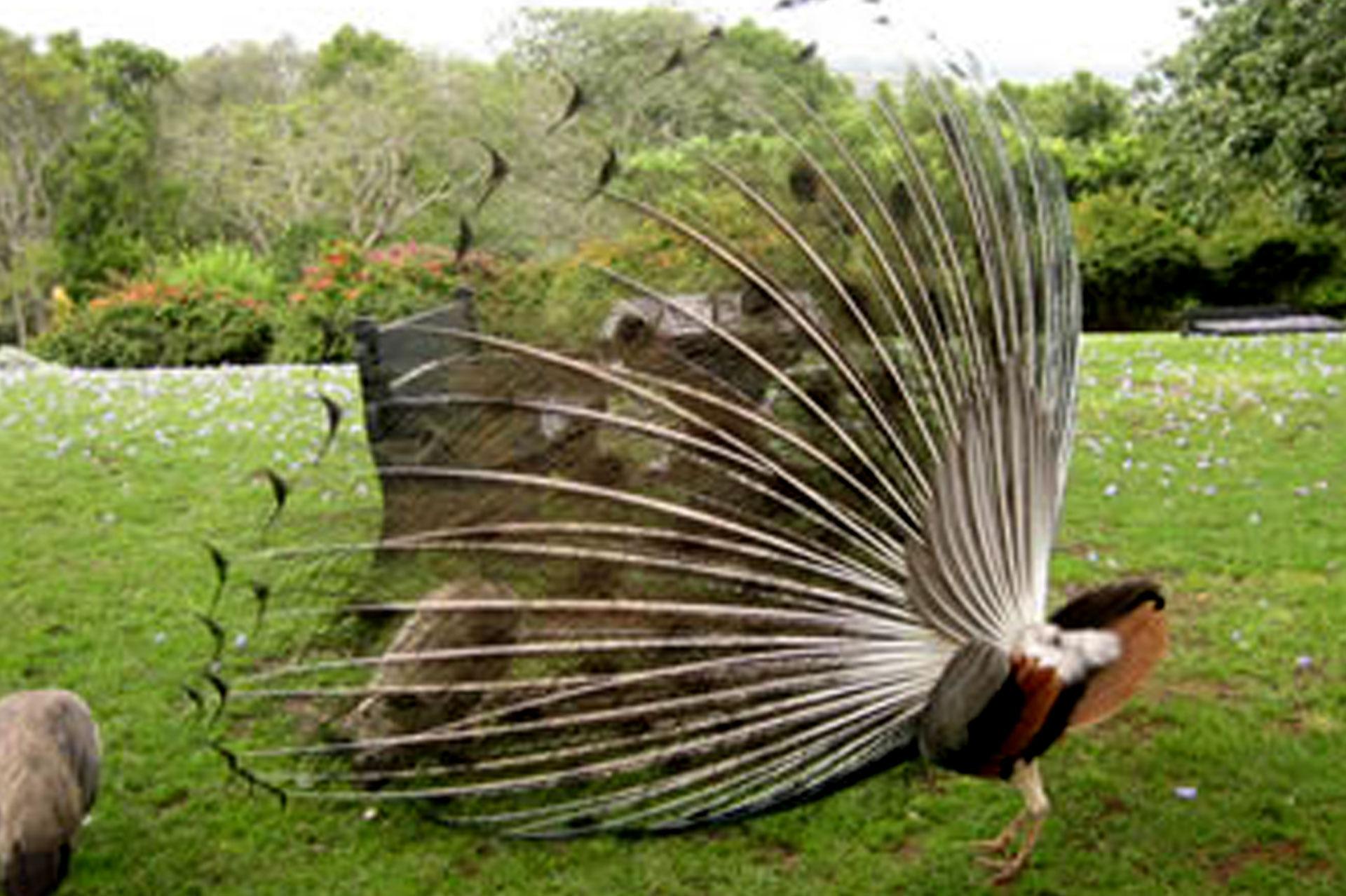 Diani_travel_center_National_Parks_in_Kenya_Aberdare_National_park_image_4