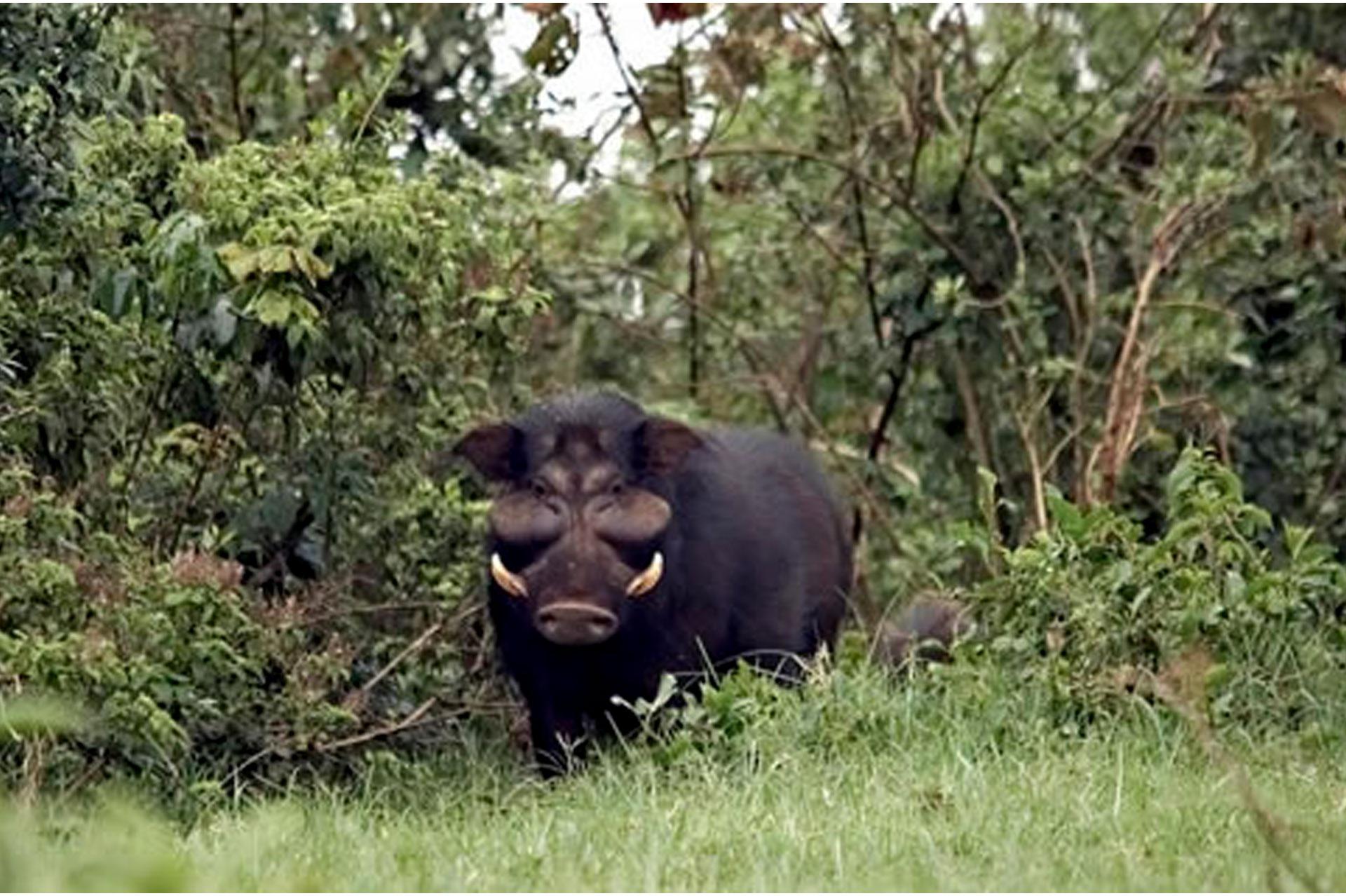 Diani_travel_center_National_Parks_in_Kenya_Aberdare_National_park_image_5