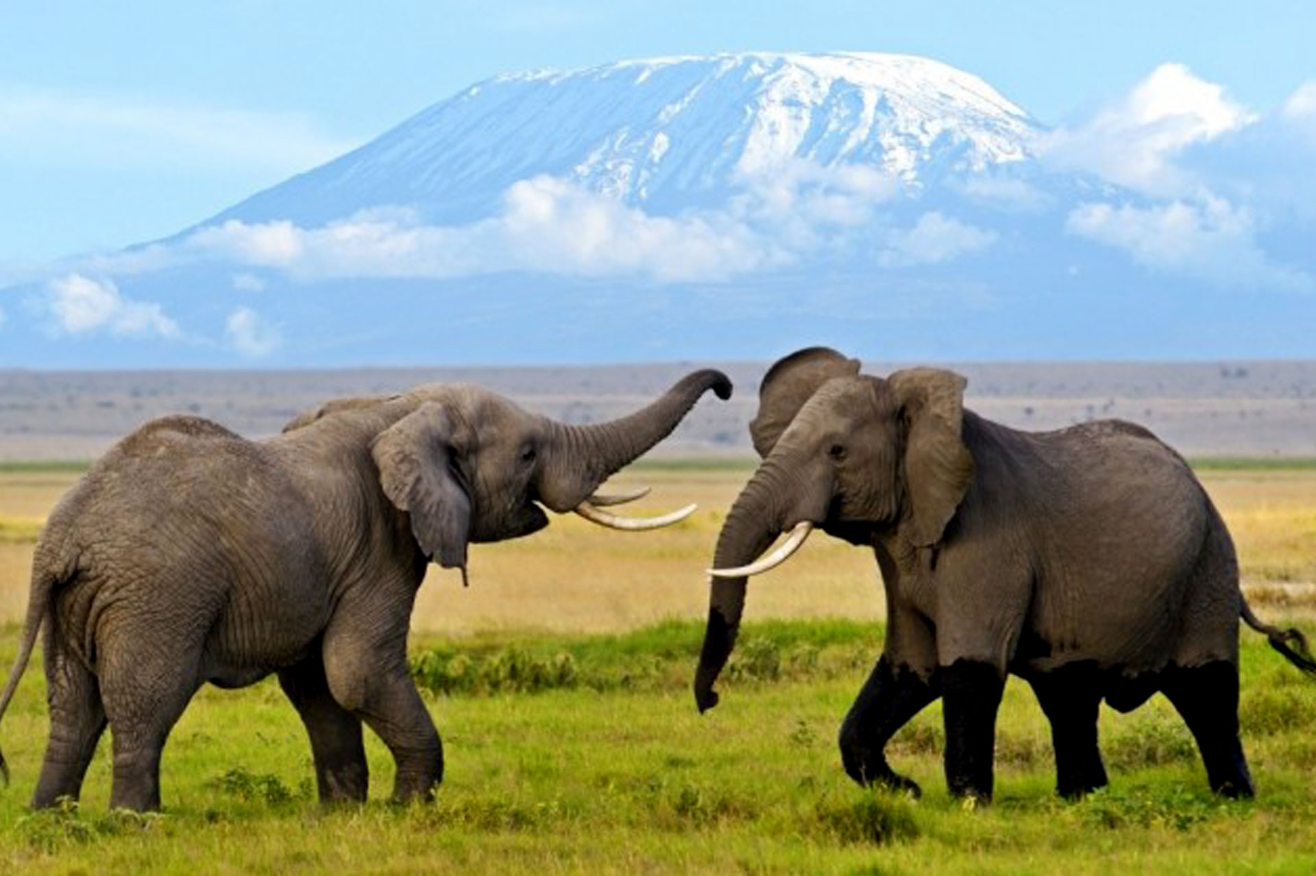 Diani_travel_center_National_Parks_in_Kenya_Amboseli_National_park_image_1