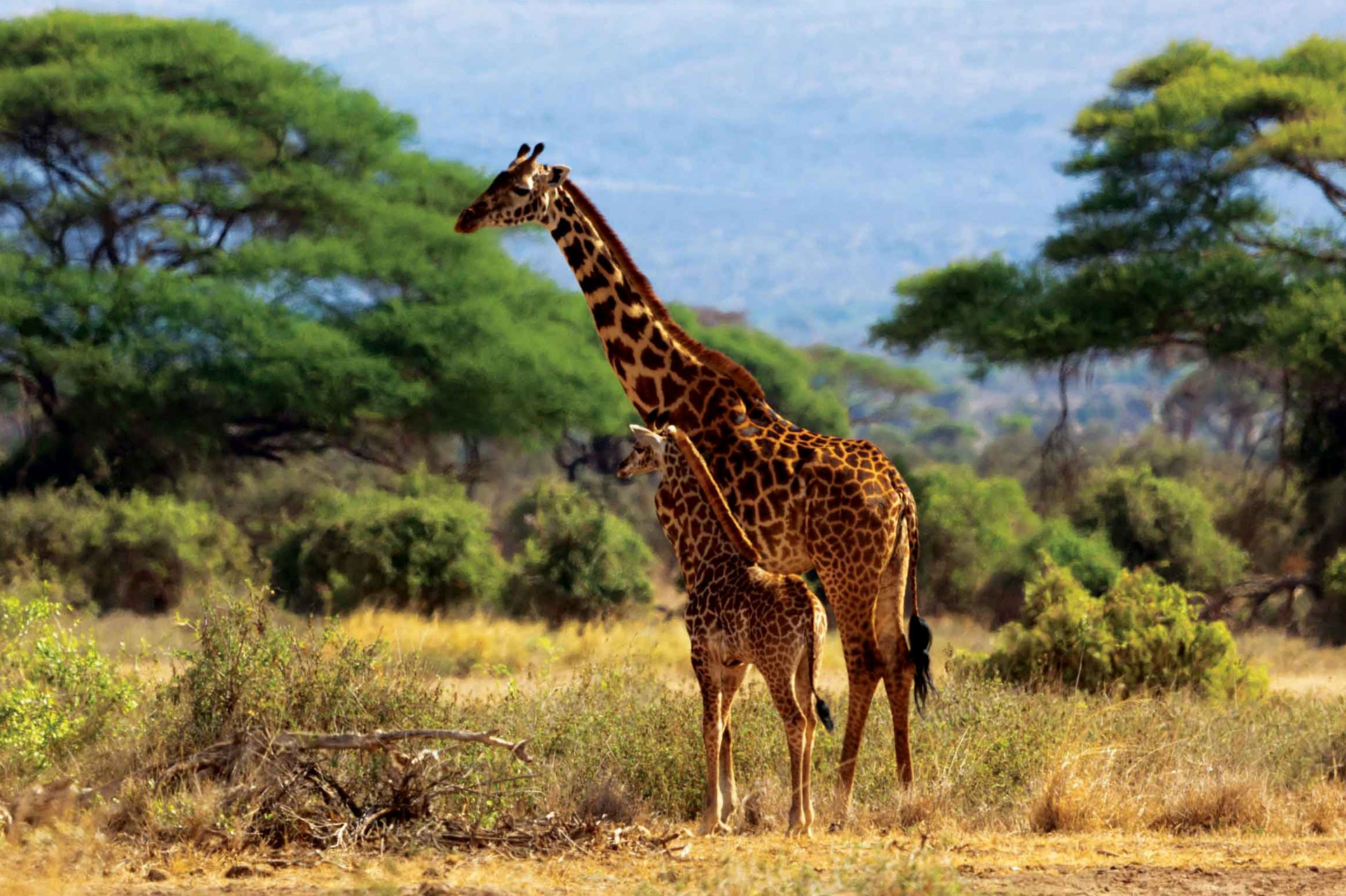 Diani_travel_center_National_Parks_in_Kenya_Amboseli_National_park_image_2