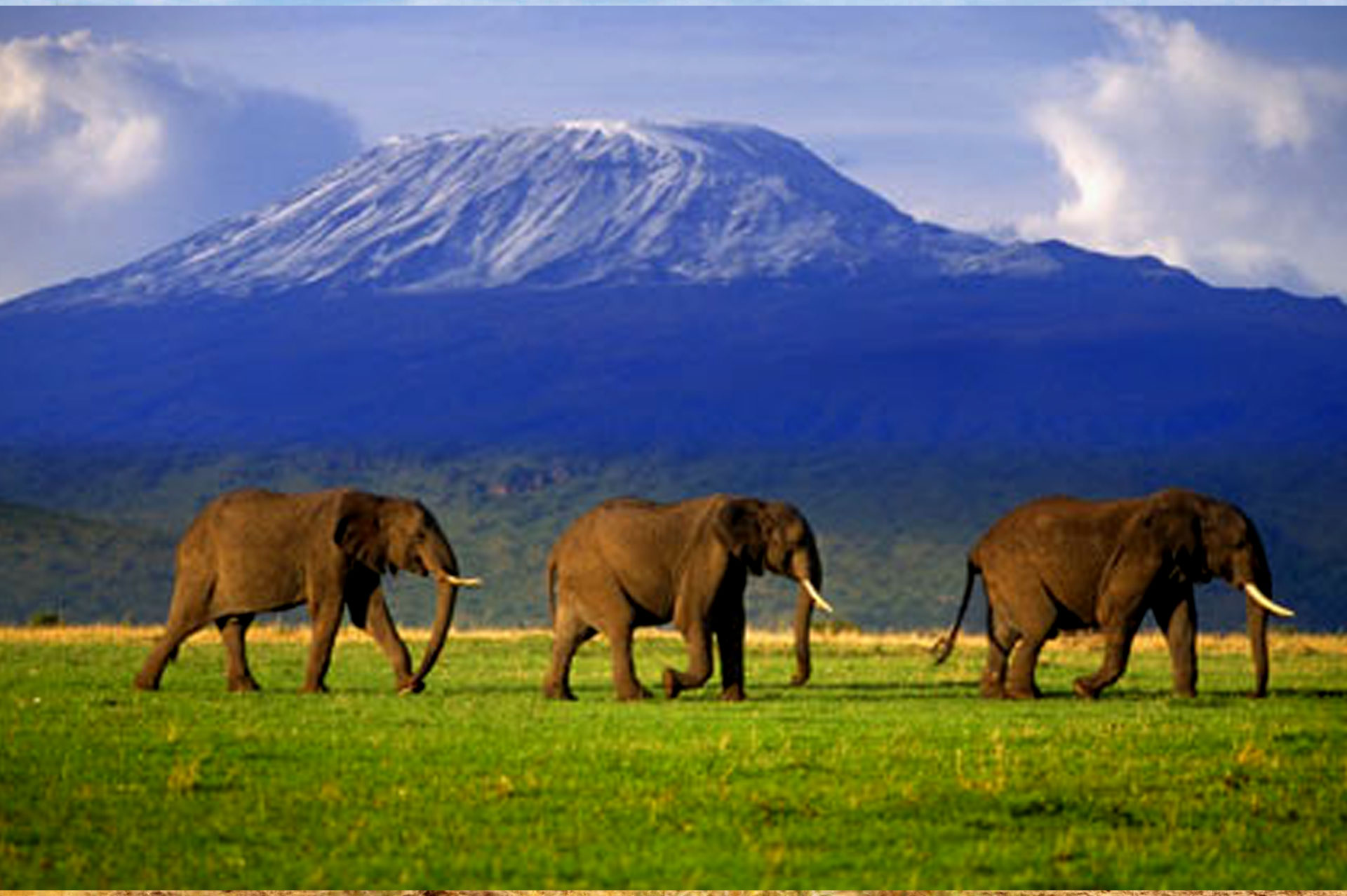 Diani_travel_center_National_Parks_in_Kenya_Amboseli_National_park_image_3