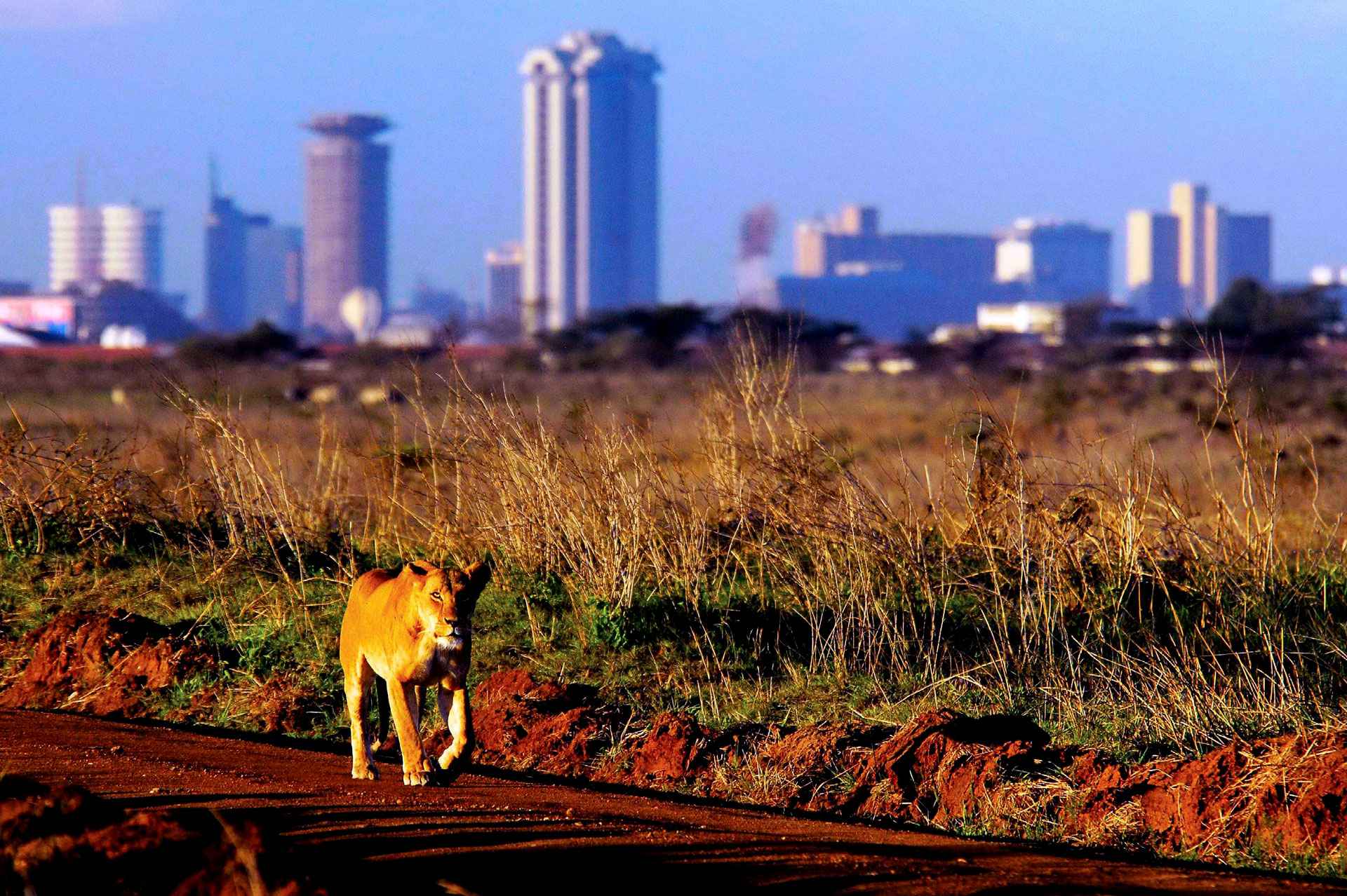 Diani_travel_center_National_Parks_in_Kenya_Nairobi_National_park_image_5jpg