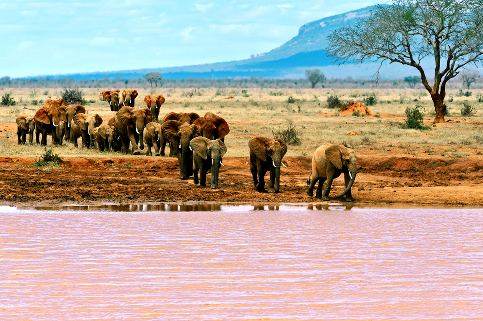 Diani_travel_center_National_Parks_in_Kenya_Tsavo_East_National_park_image_0