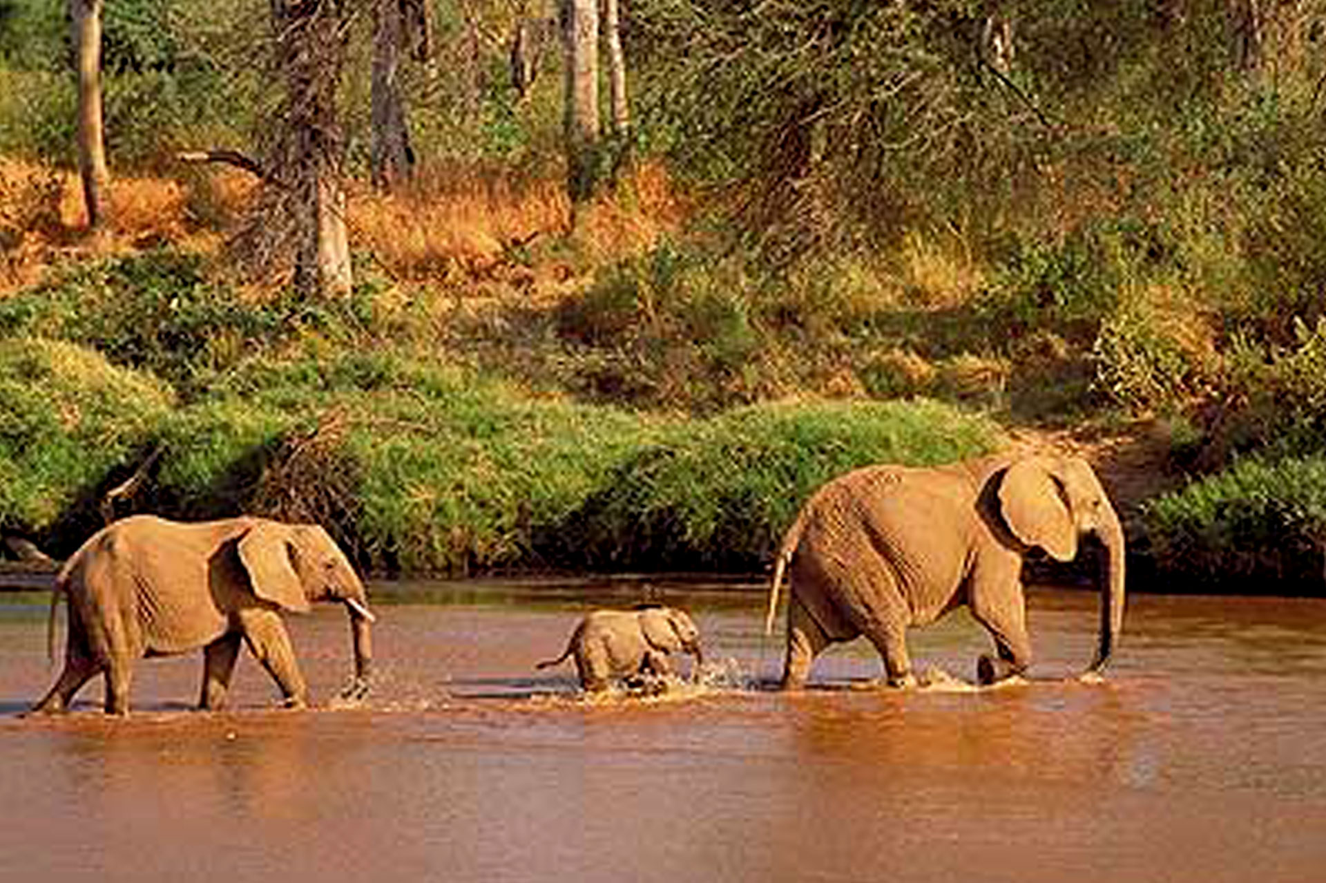 Diani_travel_center_National_Parks_in_Kenya_Tsavo_East_National_park_image_5