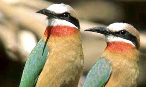 Diani_travel_center_National_Reserve_in_Kenya_Kakamega_Forest_Reserve