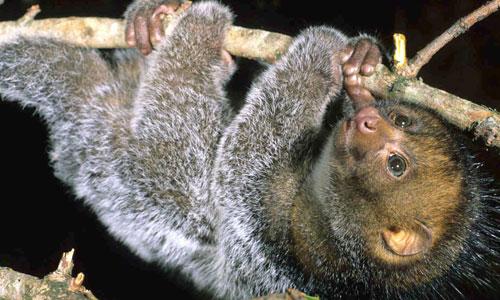 Diani_travel_center_National_Reserve_in_Kenya_Kakamega_Forest_Reserve_image_2