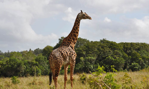 Diani_travel_center_National_Reserve_in_Kenya_Shimba_Hills_Reserve_image_2