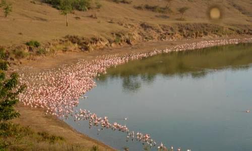 Diani_travel_center_National_Santuary_in_Kenya_Lake_Simbi_National_Santuary_