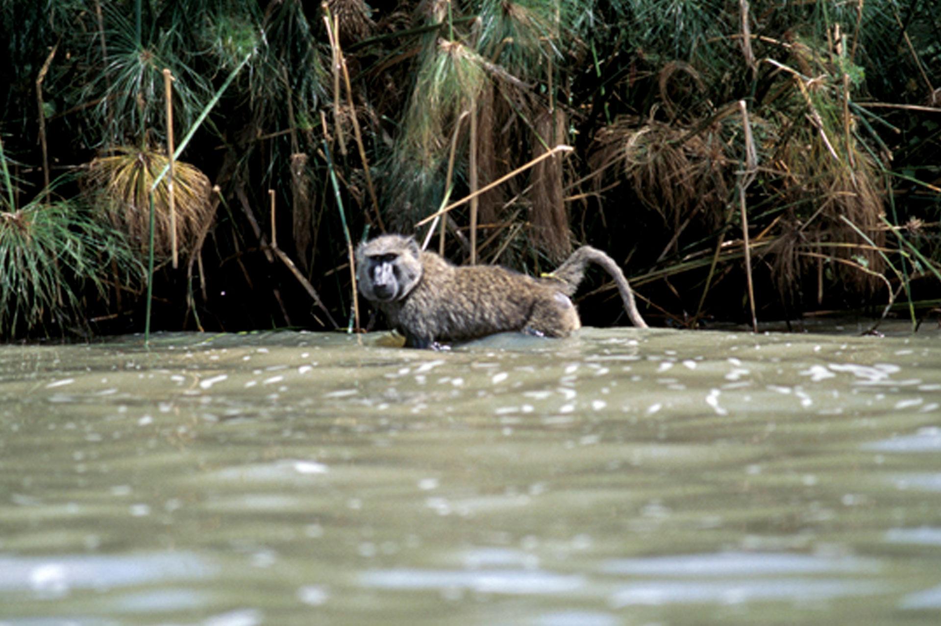 Diani_travel_center_National_parks_in_kenya_Ndere_National_park_image_4