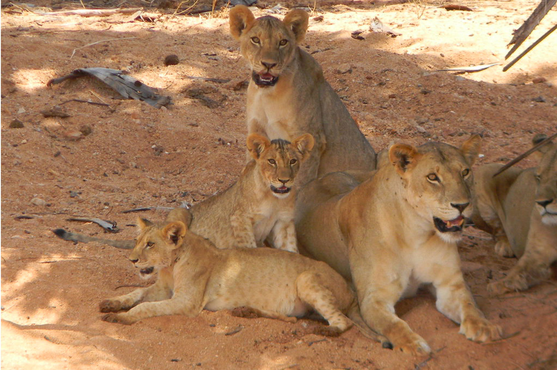 Diani_travel_center_Tours_and_Safaris_Diani_tours_and_Safaris_1_day_Tsavo_Eastjpg