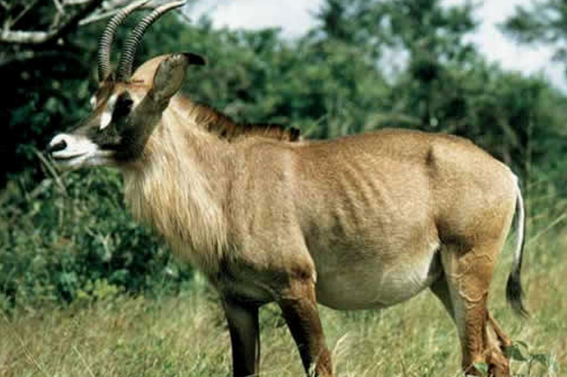 Diani_travel_center_national_parks_in_kenya_ruma_national_park_image_1
