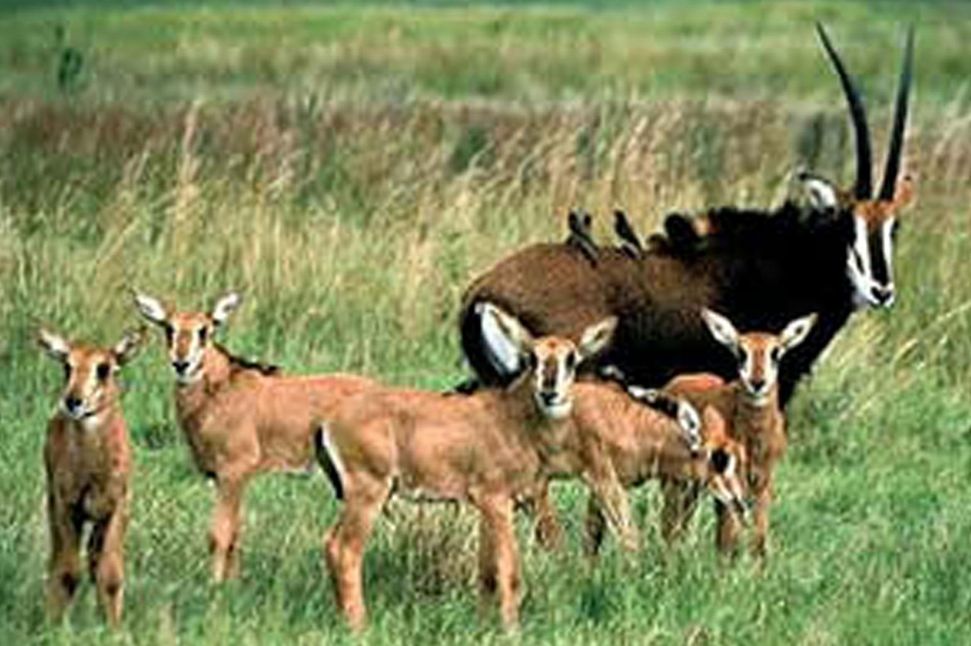 Diani_travel_center_national_parks_in_kenya_ruma_national_park_image_4