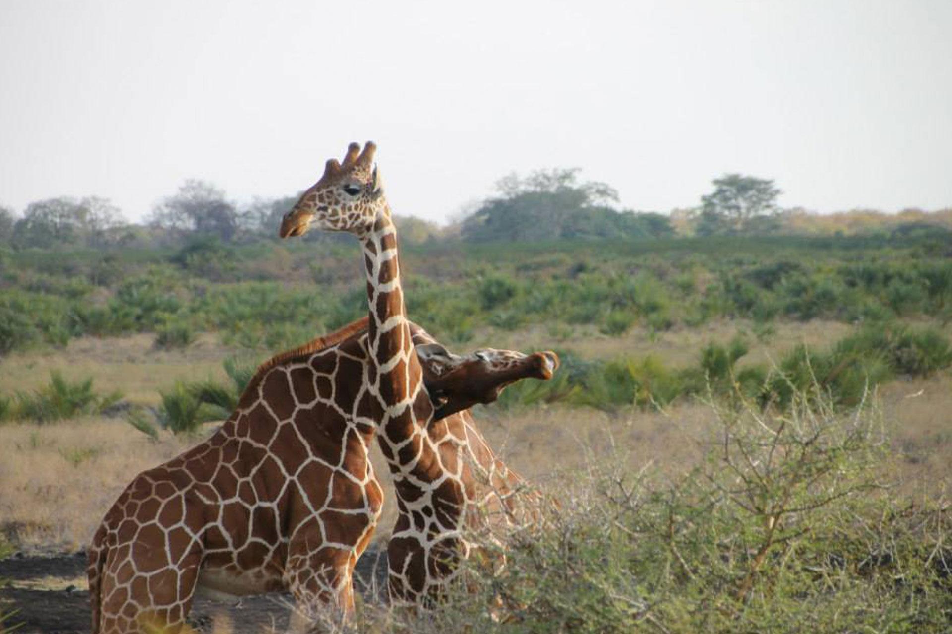 Diani_travel_center_tours_and_safaris_diani_tours_and_safaris_2_days_masai_mara_by_air_jpg