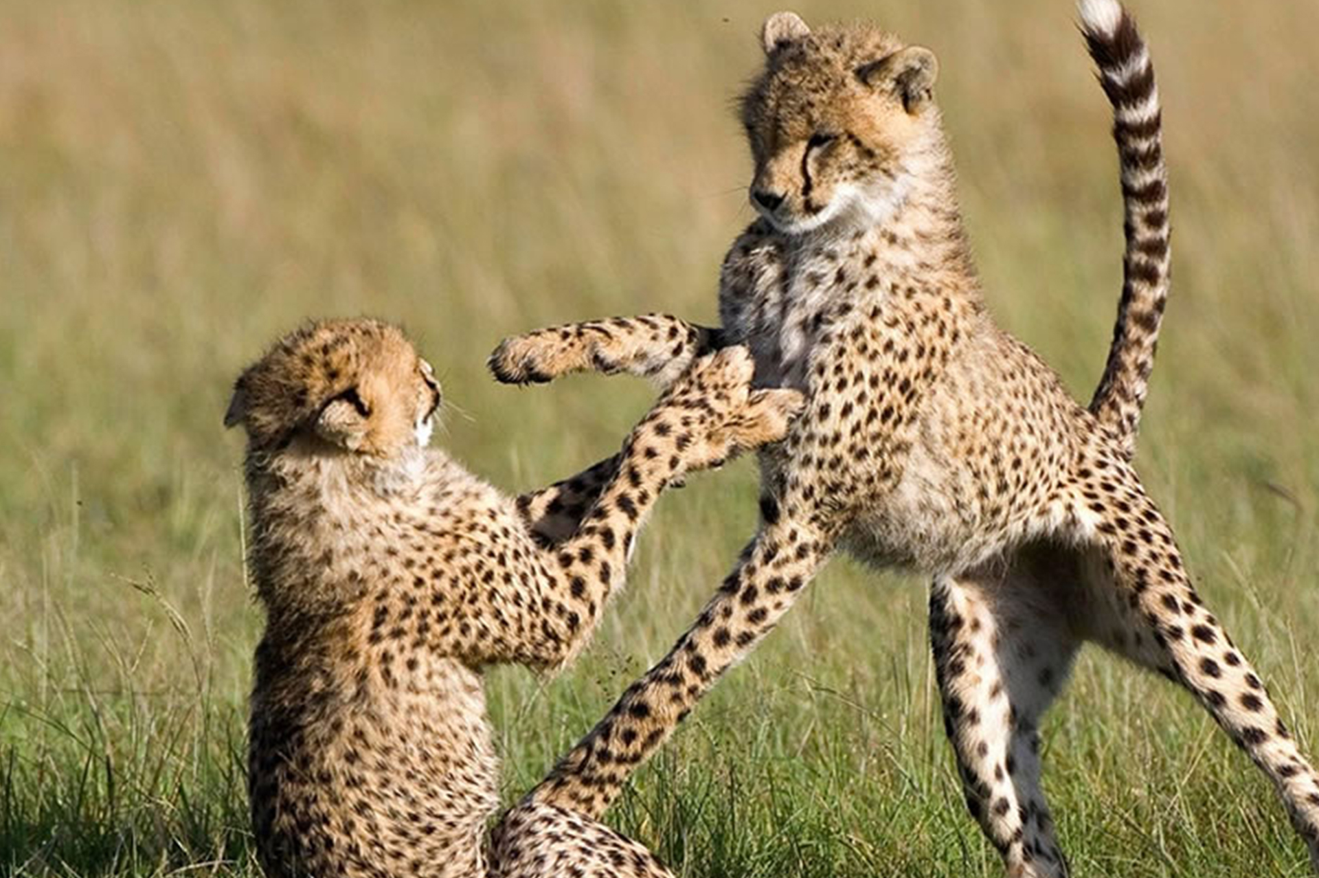 Diani_Travel_Center_4_Days_Hakuna_Matata_Special_Safari_in_Taita_Taveta_